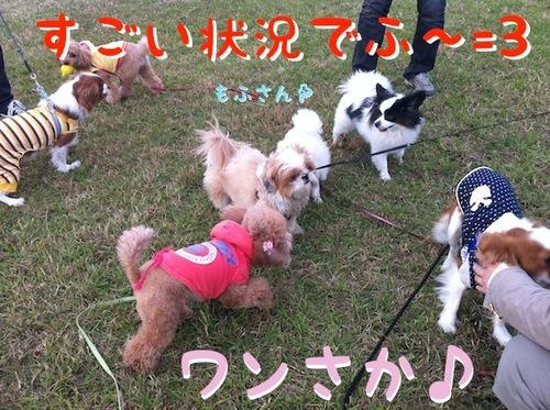 Photo 12月 10, 1 15 47 午後.jpg