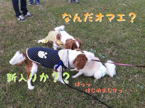 Photo 12月 10, 1 25 56 午後.jpg
