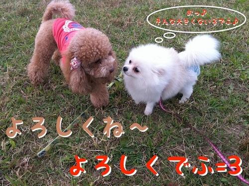 Photo 12月 10, 1 32 34 午後.jpg