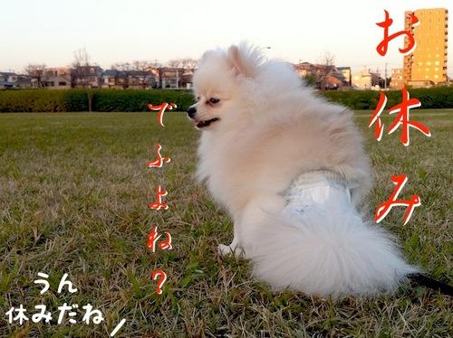 Photo 12月 17, 3 27 01 午前.jpg