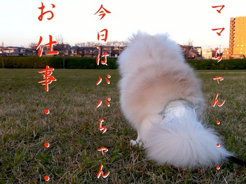 Photo 12月 17, 8 50 51 午後.jpg