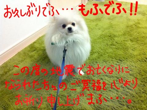 image-20110315143303.png