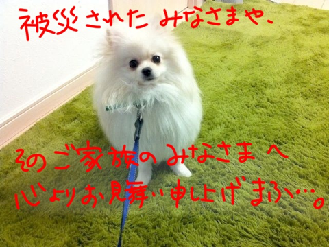 image-20110315143315.png