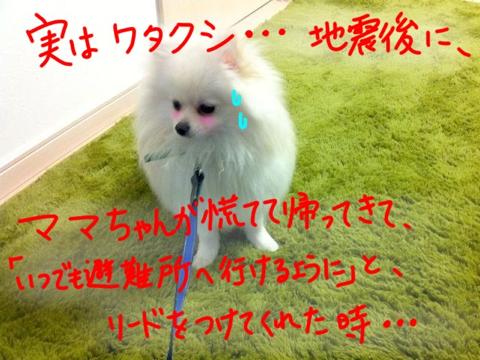 image-20110315143326.png