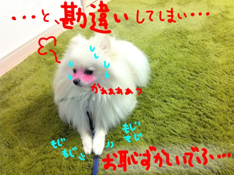 image-20110315145608.png