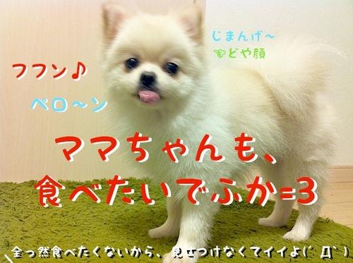 写真 11-08-13 23 01 45.jpeg