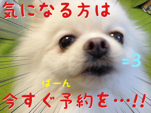 「もふラニアン」が本になりまふっ=3 -4.JPG