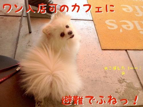 お出かけ(一応誕生日の)-3.JPG
