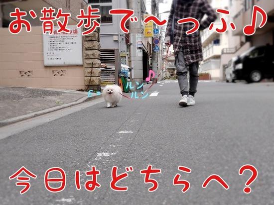 お花見・・・? -1.JPG