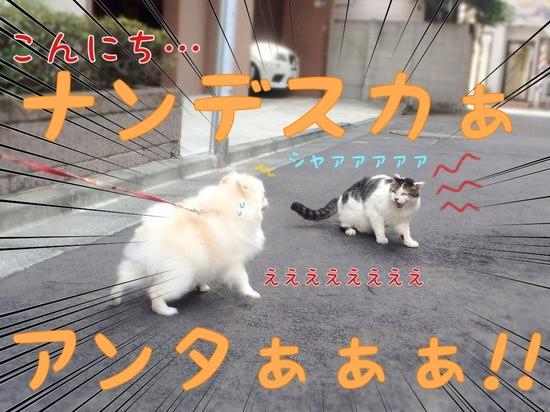 ネコさんとの遭遇。 -2.JPG