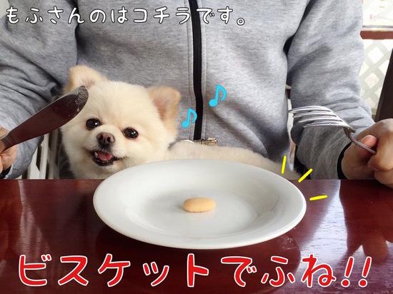 ワタクシはビスケット!!  -1.jpg