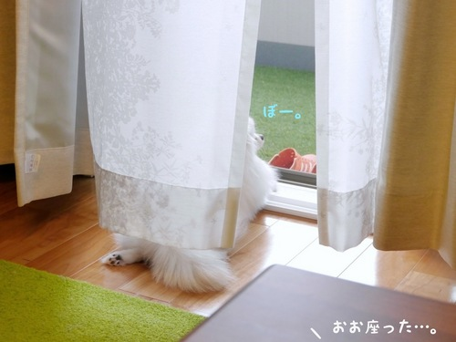 窓際。 -3.JPG