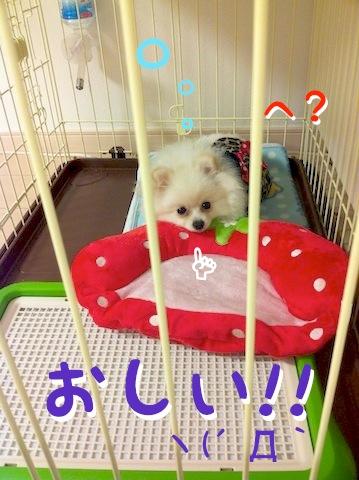 Photo 11月 30, 12 09 54 午前.jpg