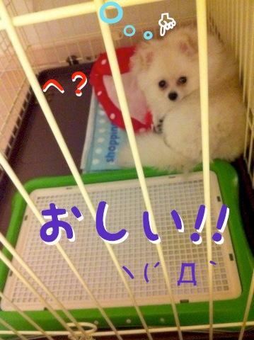 Photo 11月 30, 12 59 21 午後.jpg
