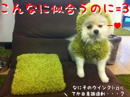 Photo 1月 24, 5 08 57 午後.jpg